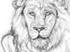 Sketch of Aslan (DW-015)