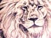 Lion sketch (DW-020)