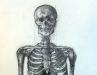 Skeleton Study (DW-032)