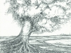 Tree by Living Waters (DW-008)