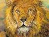 aslan-original-web