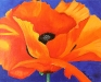 small-poppy-from-side