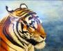 Tiger (PT-004)