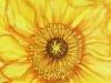 yellow-beauty